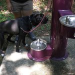 Dog Fountain located in the trail