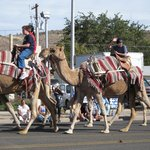 Camel parade in Kingman Beale Road days