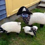 Pirate Sheep Pets!
