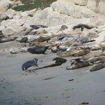 Harbor Seal Sanctuary