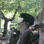 Un oso negro, muy simpatico