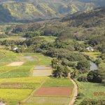 Wailua River farmland overlook