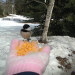 Chickadees ate from our hands at Peninsula State Park Nature Center