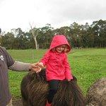 Farmer Pete and Inga the Water Buffalo