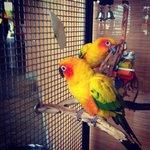 Birds @ the jw