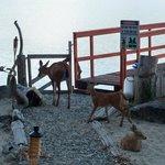 Foto de Oceanside Retreat