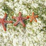 Starfish on reef