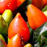 Cafe Itamar: Dwarf Pepper