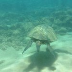 Snorkelling on beach outside Mana Kai Maui Condo Resort