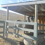 I black horse della tenuta