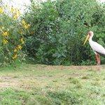 Stork - on the Lake