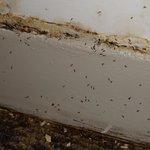蟻が大量にいました