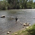 The river where your dog can play.