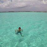 Swimming in the aqua waters