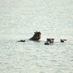 ippopotami nel lago