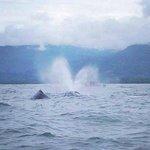 Avistamiento de delfines y ballenas... Una experiencia inigualable