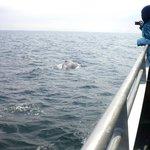 Mogul the humpback whale
