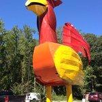 Crazy Chicken!!