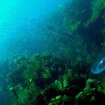 small jellyfish