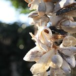 Sea shells round on Longbeach  - 2 min walk away