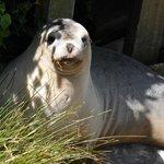 seal sunning itself on steps