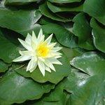 Flor en uno de los estanques