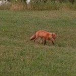 Wildlife at Limerick Lake Lodge