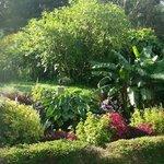 Garden, Panoramic photo