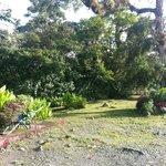 Frontside Garden