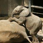 Zoo Wuppertal - Baby Mojo auf seiner Schwester Tika