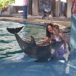 To touch the Dolphins the best experience