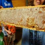 One full honeycomb