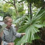 Pete explaining uniqueness of Australian Fan Palm