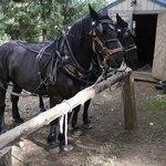 Horses ready for hay ride