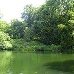 Один из прудов парка