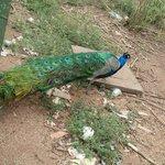 Viveiro de aves