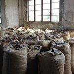 Nutmeg processing station