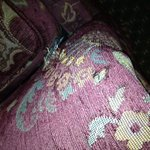 Couch chewed by dog?