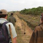 Lions Walk