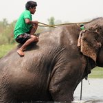 Bath with the elephants - activity organised by the hotel