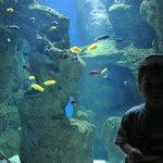 River Aquarium Zgz