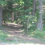 Walking Trail in the woods
