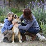 Adorable Lassie