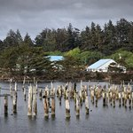 Decaying pilings on Coquille River in Bandon's Old Town
