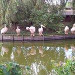 Pelikane in der Mittagspause