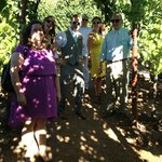 Tasting Grapes at Kunde