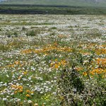 A carpet of wildflowers