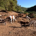 Pasture Lovrečina