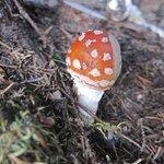 mushrooms around the grounds