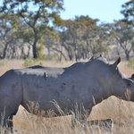 we saw at least 10 different rhino